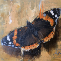 Oil study of a Red Admiral butterfly