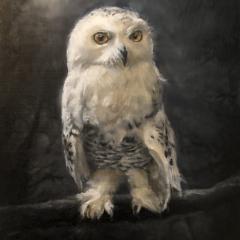 Snowy Owl in Moonlight