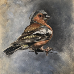 Oil study of a chaffinch