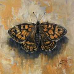 Oil study of Wall Brown butterfly