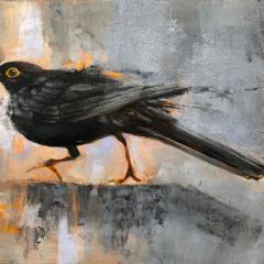 Canny  Blackbird